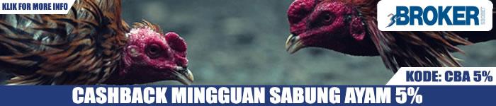 Promo Cashback Mingguan 5% Judi Sabung Ayam Online